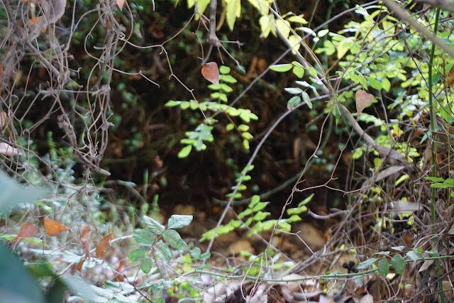 טיול חורפי ביער אשתאול