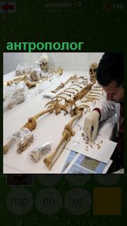 на столе лежат кости и антрополог изучает строение