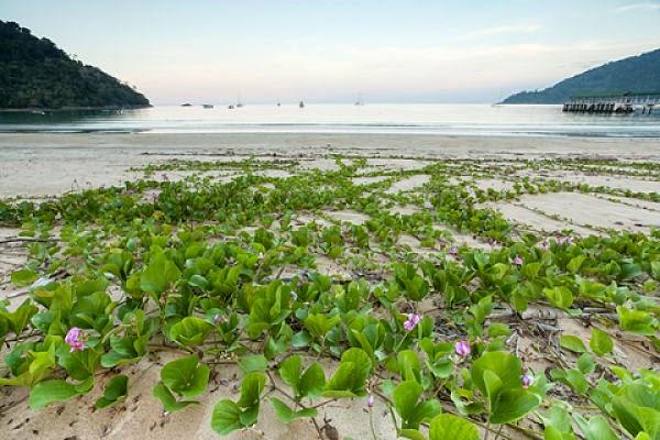 einsamer Strand auf Tioman Island