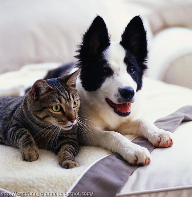 Cat and dog.