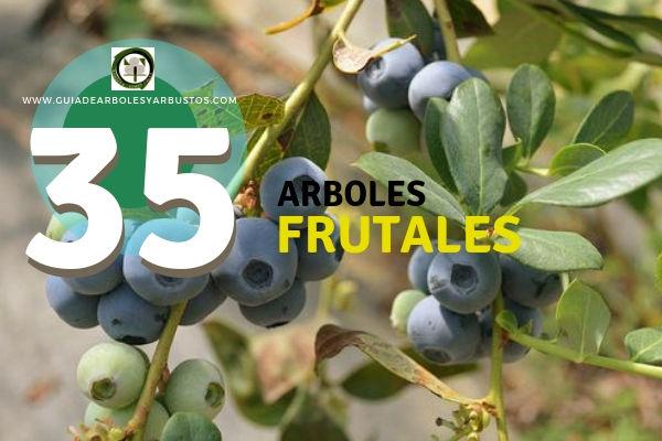 Lista de 35 Arboles Frutales para cultivo