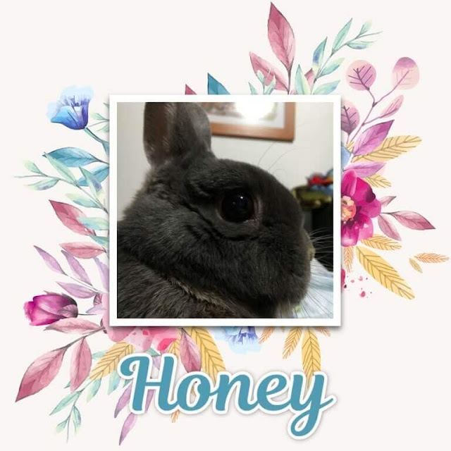 O meu Coelhinho Honey