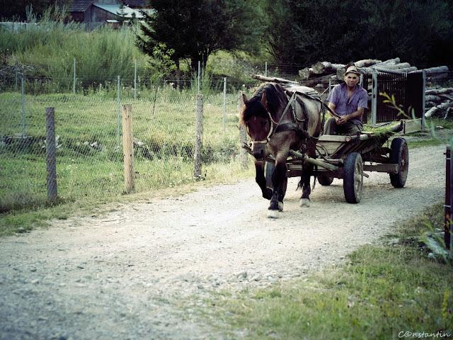 La ţară, oamenii harnici pleacă devreme la muncă - blog Foto-Ideea