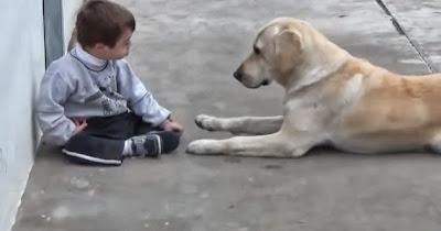 Niño down con perra labradora