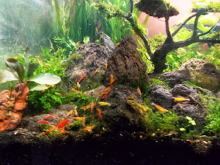 Model Aquarium Terbaru