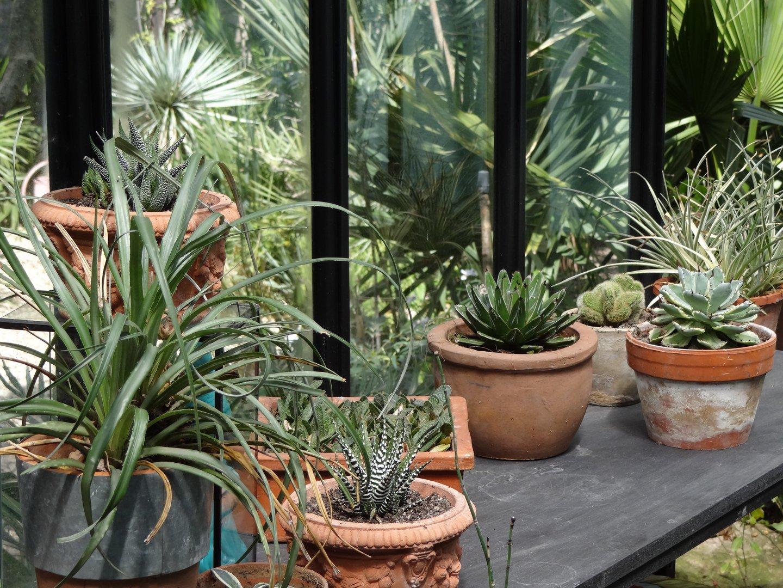 Jardin de b signoles la serre s 39 est vid e for Jardin 7 17 acapulco