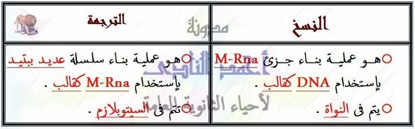 النسخ - الترجمة - الكودونات - الأحماض الأمينية - m.rna - تخليق البروتين - الثالث الثانوى