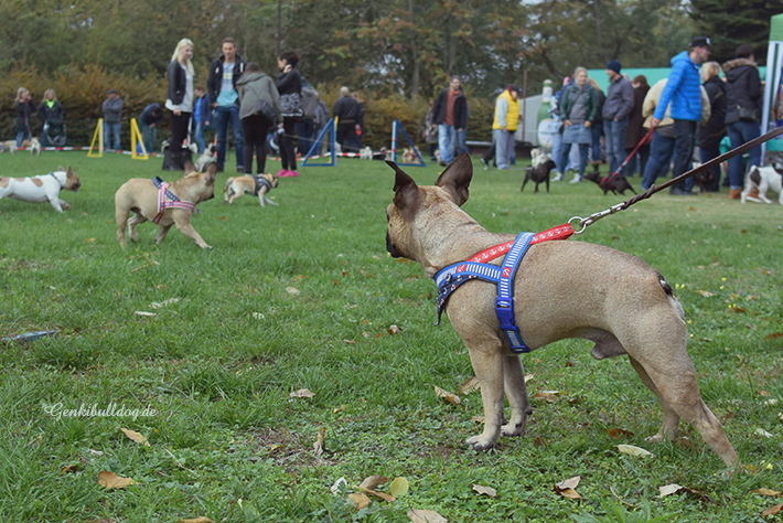 Hunderennen Mannheim