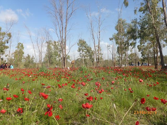 יער שוקדה -דרום אדום