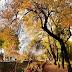 Városunkban jár az ősz