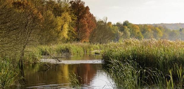 poze din Parcul Natural Comana, județul Giurgiu