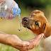 Η χρησιμότητα του νερού...