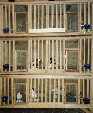 Desain Cara Membuat Pagupon Kandang Merpati Dari Bambu dan ...