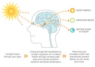 hormon pada waktu tidur