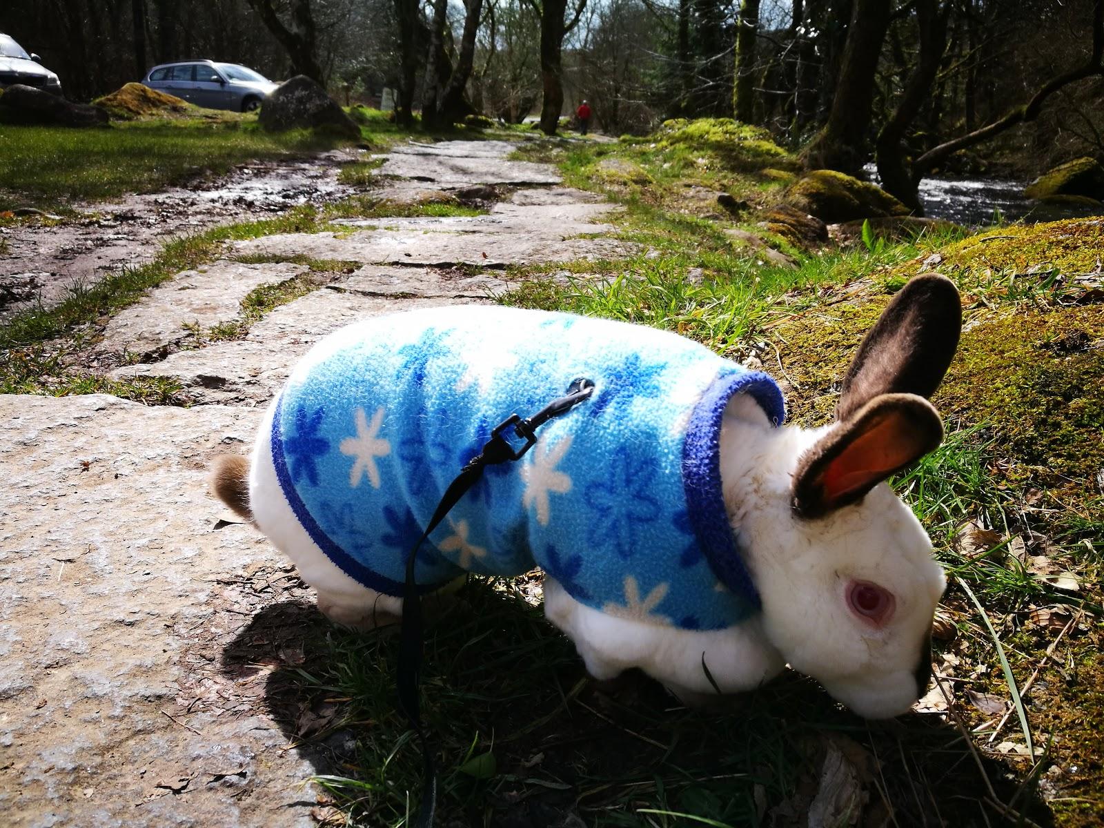 Speedy the cheeky house bunny: Sunday Selfies and Mr Mickey