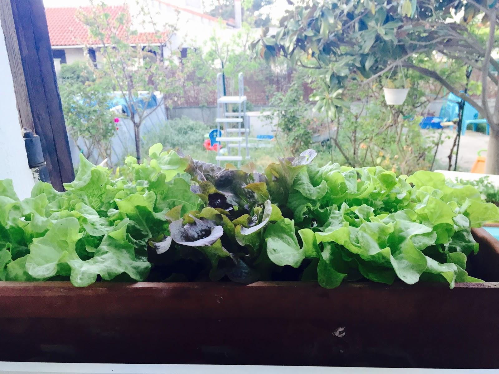 Potager 3 Etages Botanic initiales gg  : {jardin} réalisez un potager urbain pour