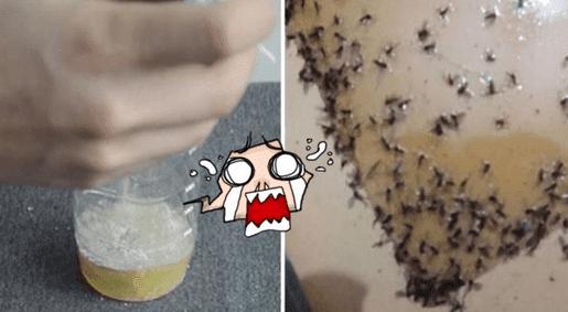 Cara Membuat Alat Perangkap Nyamuk Sederhana Tapi Sangat Ampuh