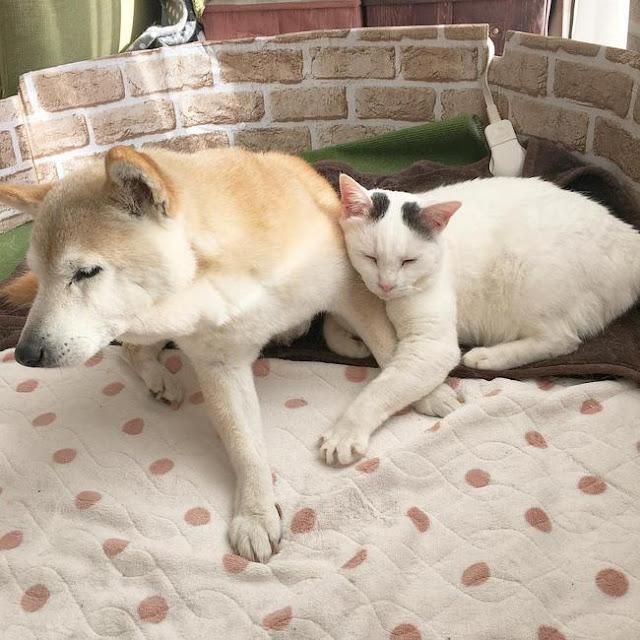 Tình bạn đẹp nhất Trái đất giữa anh mèo chảnh choẹ và chú chó già