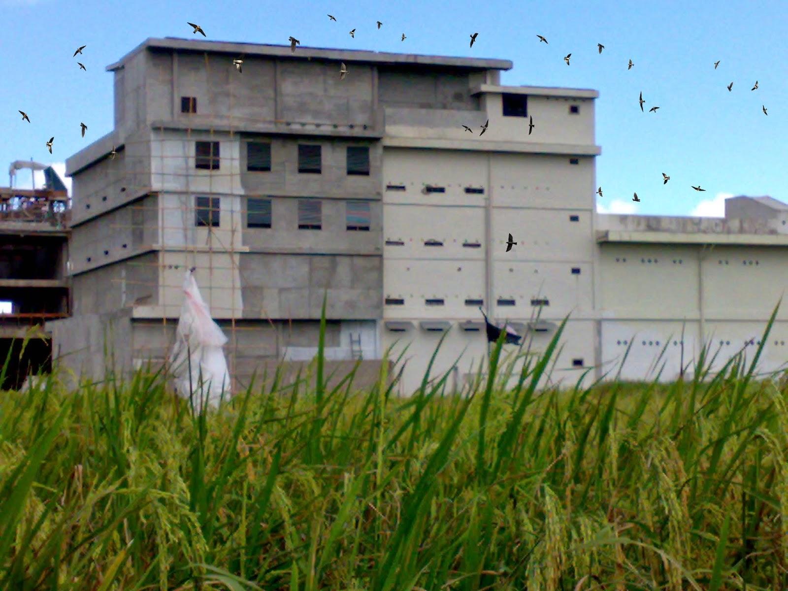 Kumpulan Gambar Rumah Walet Burung Walet Kalimantan