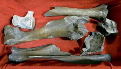 Tulang Mermaid atau Putri Duyung Ada di Kuil Jepang?