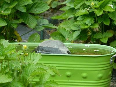 ogród przyjazny ptakom, poidło dla ptaków, slow life