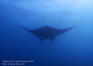 Dive with Mantas at Komodo National Park