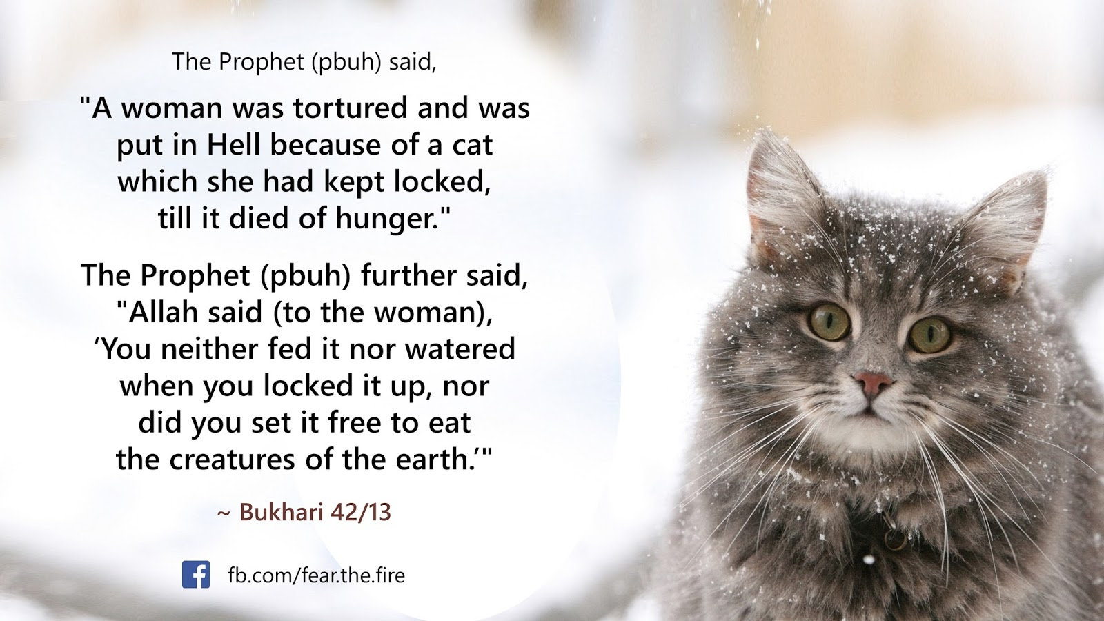 Keeping cats in islam