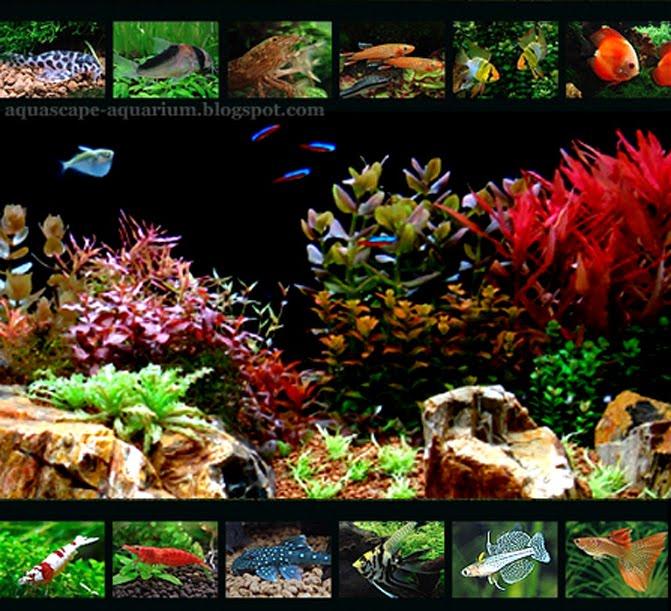 Tropical Aquarium Plan...