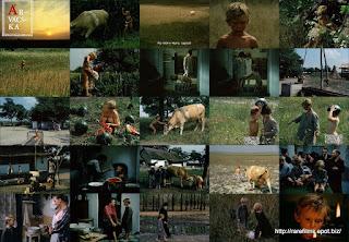 Сиротка / Árvácska / Nobody's Daughter. 1976. DVD.