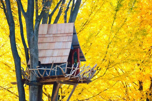 شاهد صور 29 منزل فوق الأشجار سيعجبك أن تعيش بها  Top-29-Treehouses-Tokyo-Photo-by-Norisuke-Fukui