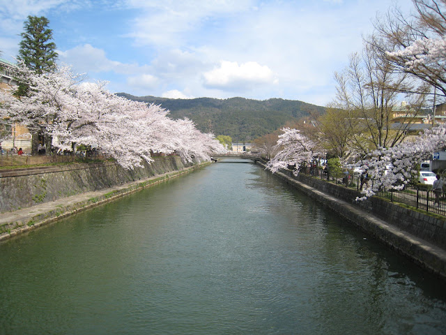 Best Cherry Blossom Spots in Kyoto