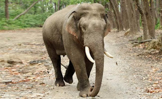 one-man-killed-by-elephant-in-jharkhand