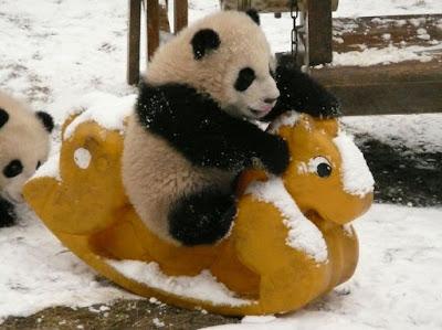 Imagenes de pandas