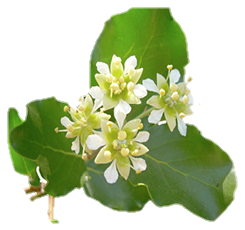 quillaja saponaria extract, quillaja saponaria bark, quillaja saponaria molina, quillaja saponaria propiedades, quillaja saponaria benefits, quillaja saponaria powder, quillaja saponaria allergy, quillaja saponaria arbol, quillaja saponaria australia, quillaja saponaria bark extract allergy, quillaja saponaria en la agricultura, soap bark powder (quillaja saponaria) and its derivatives containing saponins, quillaja saponaria bulk, quillaja saponaria chile, Aulora Feminine Hygiene, Feminine Hygiene, Pembersih daerah kewanitaan, organ kewanitaan, Vagina, Keputihan, Kanker Serviks, Miom, aurora, auroratoto, aulora gamat bar soap, aulora band, aulora feminine, feminine hygiene products, feminine hygiene wipes, feminine hygiene products tax, feminine hygiene tips, feminine hygiene spray, feminine hygiene wash, feminine hygiene pads, feminine beauty, feminine logo, feminine style, feminine hygiene v-pet, feminine font, feminine hygiene new test-v, feminine hygiene new gold v, hygiene adalah, hygiene sanitasi, hygiene dan sanitasi, hygiene perorangan, hygiene sanitasi makanan, hygiene kit, hygiene makanan, hygiene sanitasi adalah, higiene industri, pibipibo, pibipibo adalah, pibipibo sabun collagen, pibipibo gamat spray manfaatnya, pibipibo sabun, pibipibo harga, pibipibo marketing plan, pibipibo green coffee, pibipibo review, arsyla bangkit mandiri