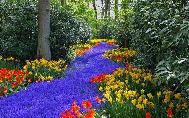 Pic Of Flowers Garden