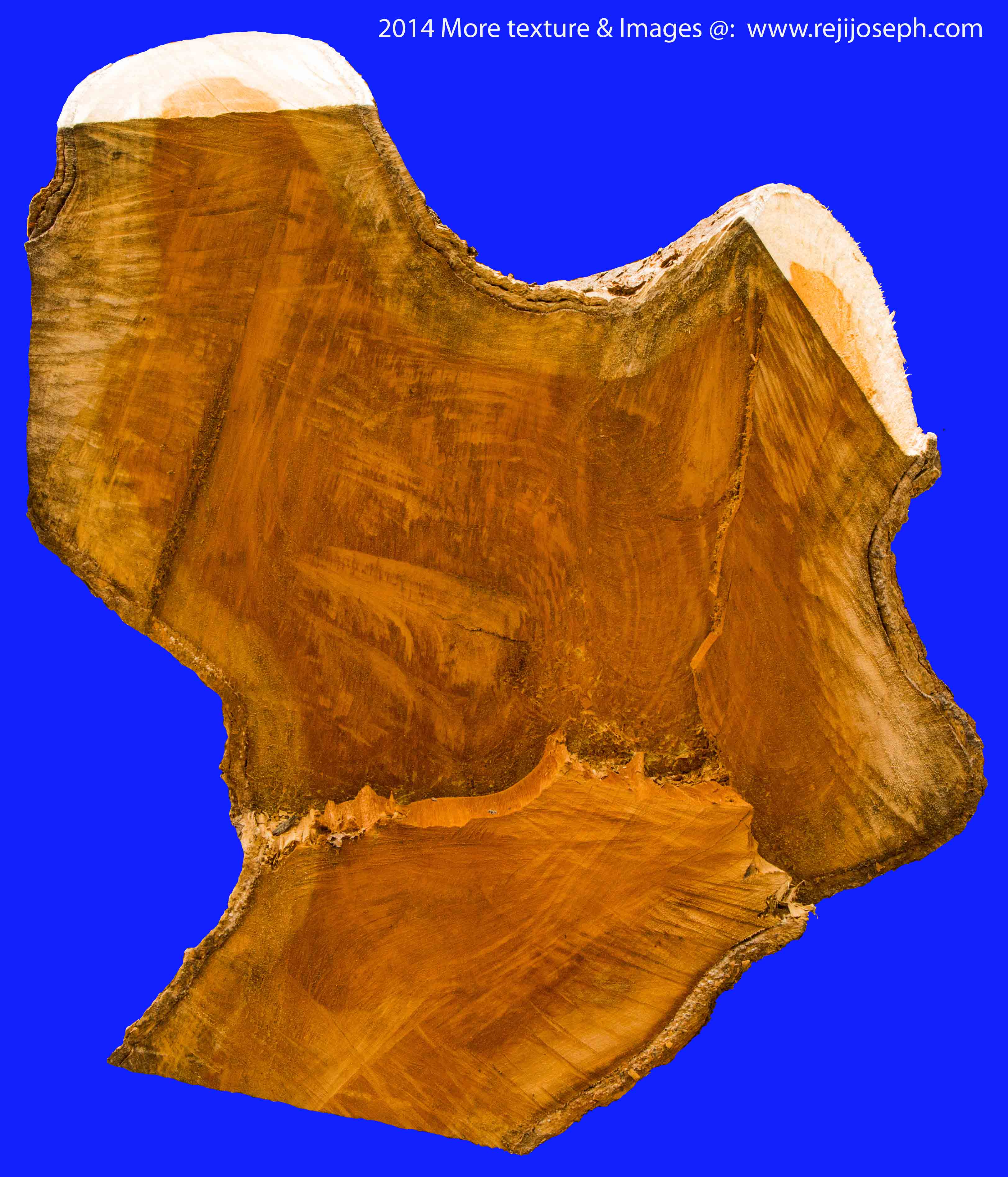 Wood Tree Trunk texture 00001