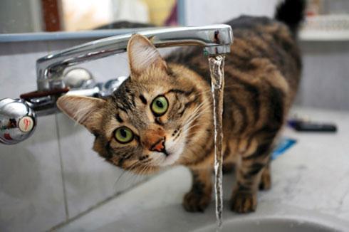 Cat Day 2016
