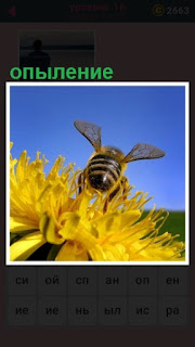 происходит опыление цветка пчелой