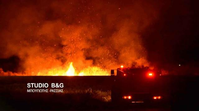 Ολονύχτια μάχη με πύρινα μέτωπα σε Αυλώνα, Χανιά και Ηλεία - Ανακοίνωση της πυροσβεστικής