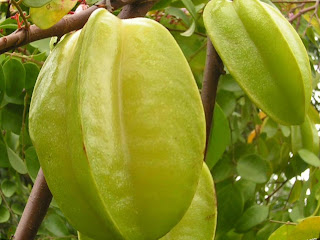 Carambola fruit images wallpaper