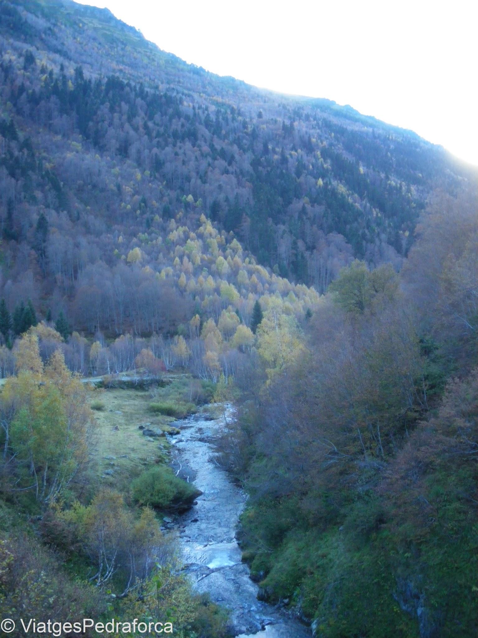 Varradòs, Val d'Aran, fageda, tardor, Pirineus de Lleida, Catalunya
