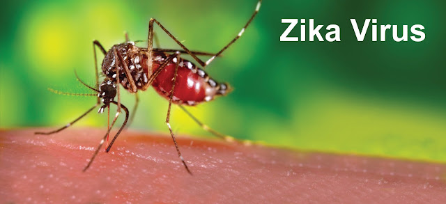 Zika Virus About 4 things you need to know