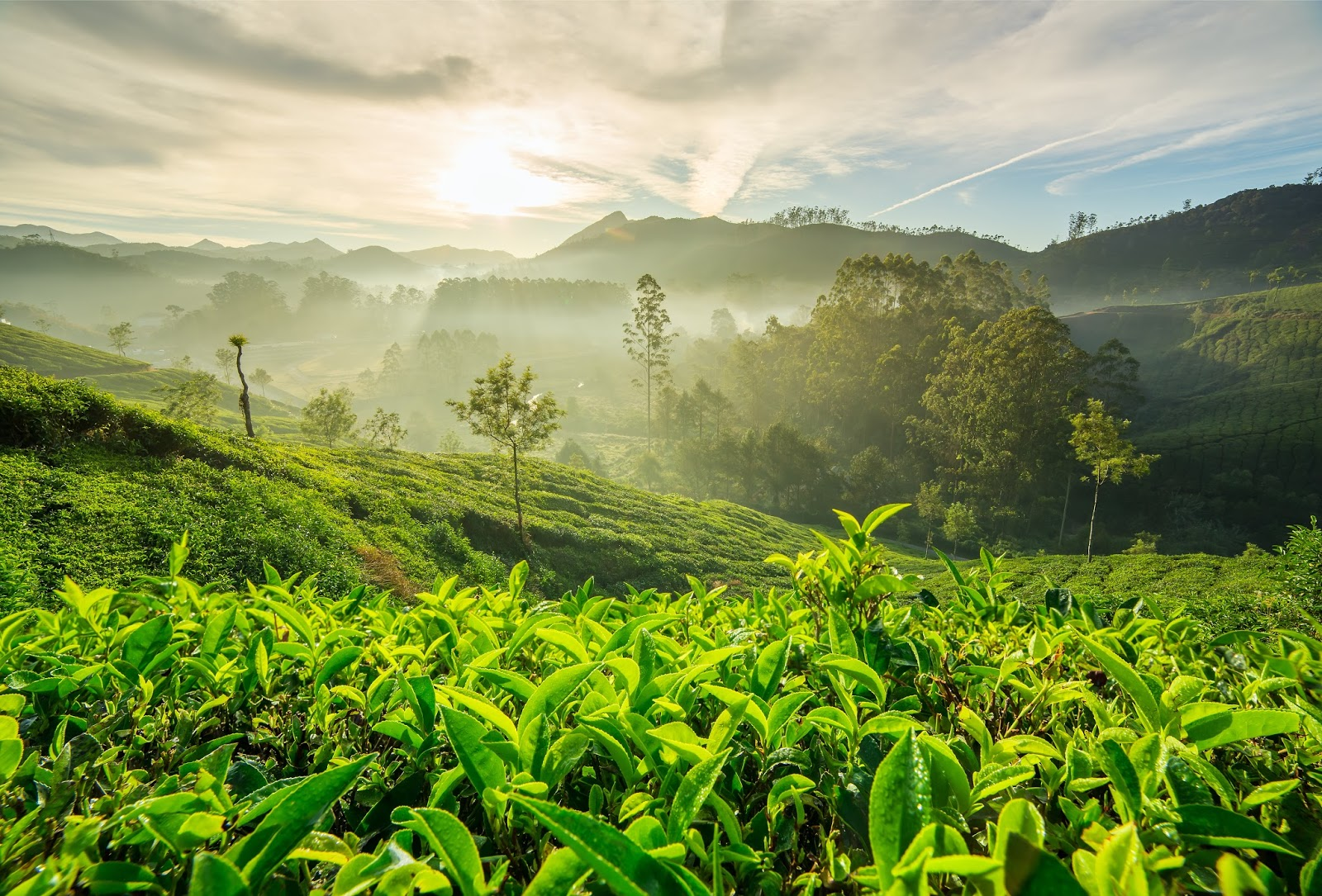 Munnar - the best family holiday destination