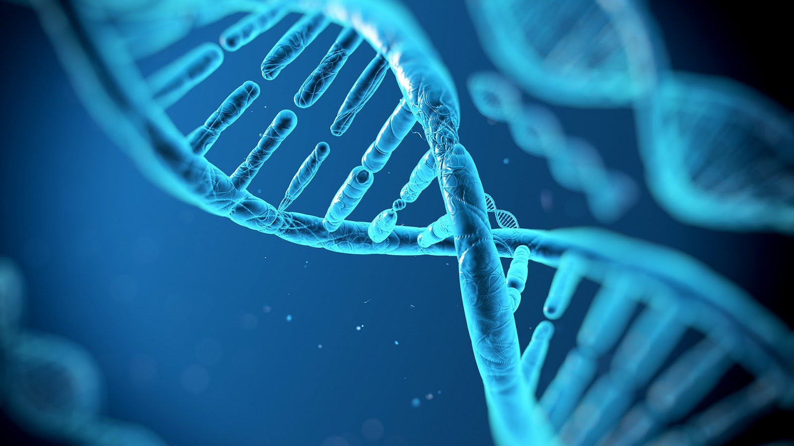 How It Was Proved That Deoxyribonucleic Acid Dna Is The