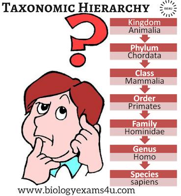Taxonomic hierarchy (human taxonomy chart)