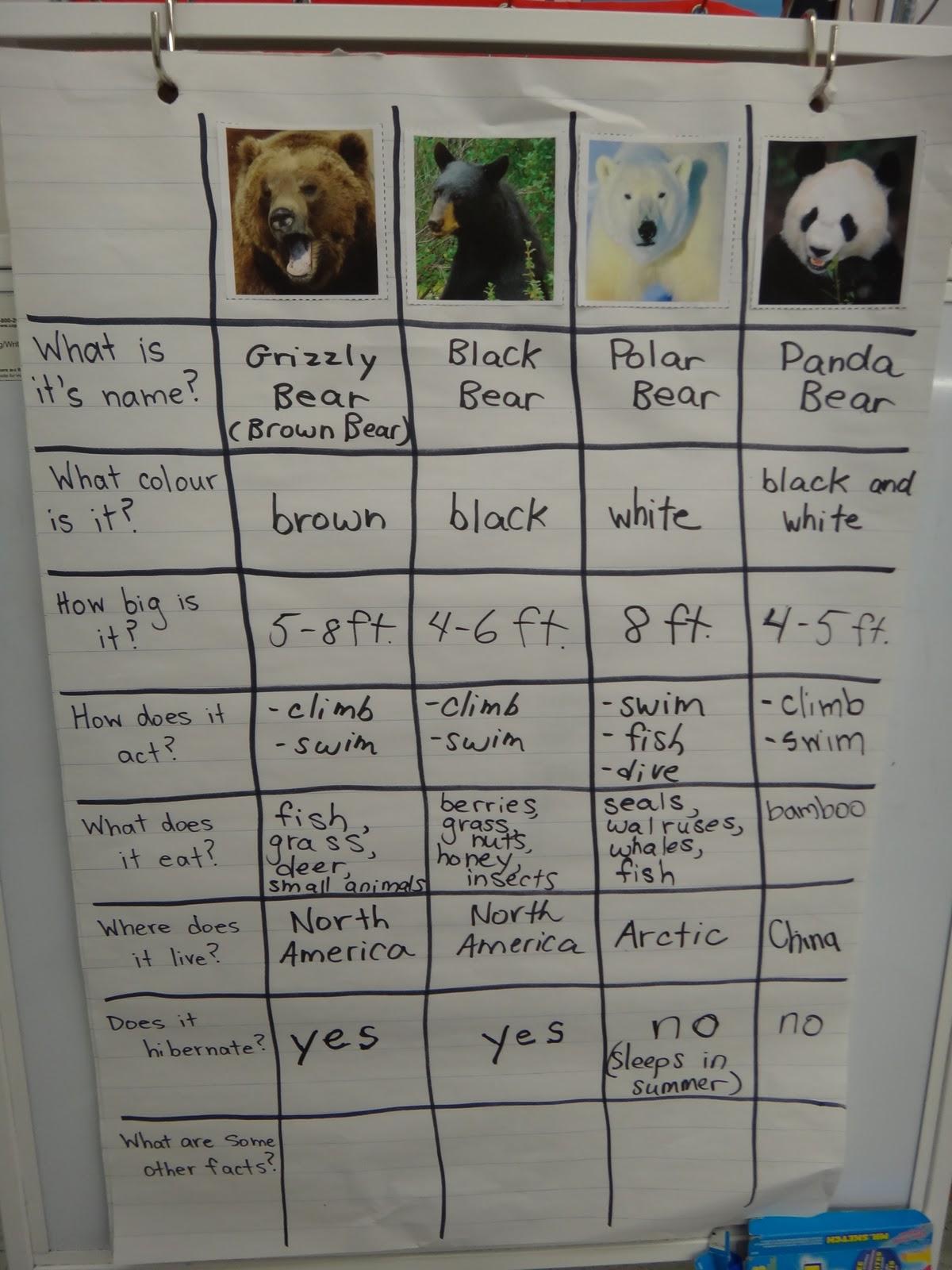 Brown Bear Diagram Earth S Core First Grade Garden More Bears