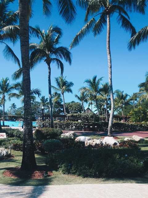 Palm Trees Dreams La Romana Resort Dominican Republic