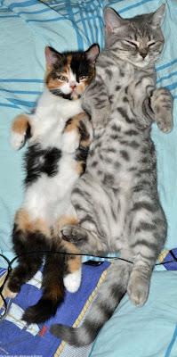 Müde Hauskatzen schlafen auf Bett