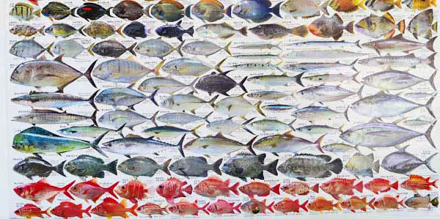 fish identification, poster, Okinawa