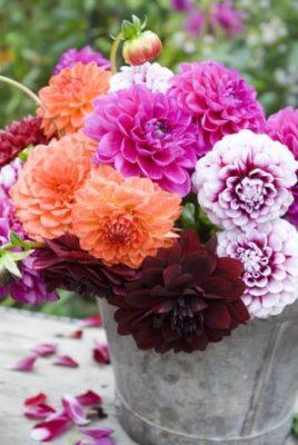 Sobno Cvijeće